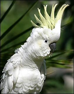 попугай ара где живёт без регистрации